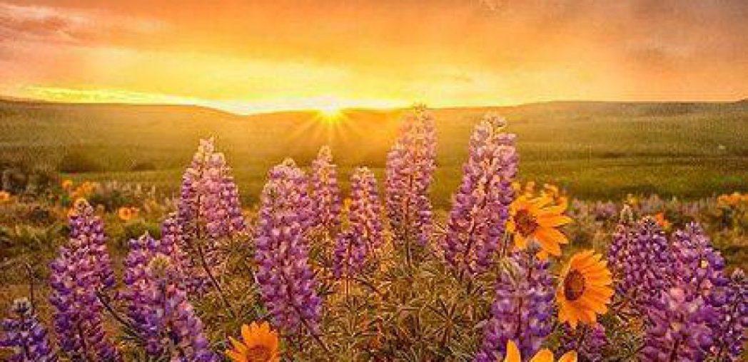 cropped-sunrise-flowers-21.jpg