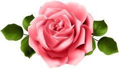 Rose alone