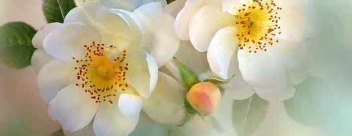 Accepted By His Amazing Grace